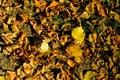 Foliage texture Royalty Free Stock Photography