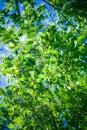 Foliage wind 库存照片