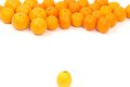 Follow the leader confrontation lemon and oranges on a white background symbolizing Stock Images
