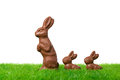 Follow me three nice chocolate easter bunnies on a fresh meadow isolated on white Royalty Free Stock Image
