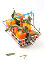 Food basket of tangerines metal full with leaves isolated over white Stock Image