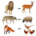 stock image of  Food chain animals