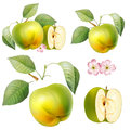 Food fruit apple drawing elements green with leaves and flowers of the picture Royalty Free Stock Image