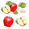 Food fruit red apple drawing elements green with leaves and flowers of the picture Stock Photo