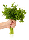 Food hand holds a bouquet of parsley isolated on a white background Royalty Free Stock Images