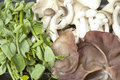 Food Pack Mushrooms