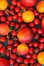 Food Pattern Ripe Organic Summer Fruits Berries Sweet Cherries Nectarines Apricots Vibrant Colors on Dark Blue Background. Royalty Free Stock Photo