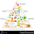 Food pyramid easy to edit vector illustration of chart Stock Photography