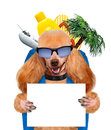 Food for thought dog keeps paws white banner Stock Images