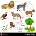 Food web easy to edit illustration of Stock Photo