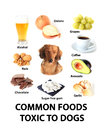Foods toxic to dogs Royalty Free Stock Photo