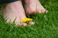 Foot on the grass Stock Image