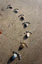 Foot, pebble, sand, art, beach Royalty Free Stock Photo