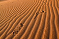 Foot Print in Sahara Desert Stock Photography