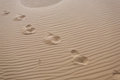Foot prints in desert. Royalty Free Stock Photo