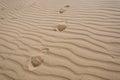 Foot prints in desert. Royalty Free Stock Photo