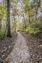 Foot trail in the forrest Royalty Free Stock Photo