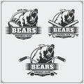 Football, baseball and hockey logos and labels. Sport club emblems with head of bear.