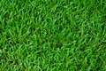 Football field green grass pattern texture background Royalty Free Stock Photo