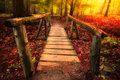 Footbridge through forest path woods in magical light Royalty Free Stock Image
