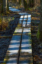 Footbridge on the ground to help walkers stay dry when crossing wet land dark forest floor with contrasting frosty ice Royalty Free Stock Images