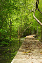 Footbridge at mangrove forest in tropical rain Royalty Free Stock Images