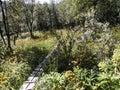 Footbridge Surrounded With Wild Flowers.