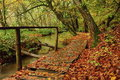 Footbridge in the woods Royalty Free Stock Photo