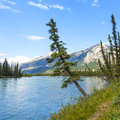 Footpath along the athabasca river jasper national park canada Stock Photo