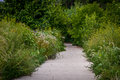 Footpath along lush wildflower garden Royalty Free Stock Photo