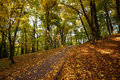 Footpath in autumn city park strewn with yellow fallen leave the leaves Stock Photo