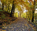 Footpath in autumn city park with yellow fallen leaves the Royalty Free Stock Images