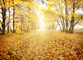 Footpath in autumn park with yellow foliage Stock Photos