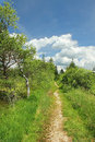Footpath through bogland nature protection area bavarian landscape Royalty Free Stock Photos