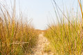 Footpath in dry grass field Royalty Free Stock Photo