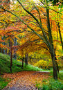 Footpath in the forest beautiful view on a and trees autumn season Stock Photography