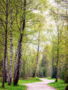 Footpath at a forest photo Stock Photo