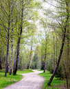 Footpath at a forest photo Stock Photography