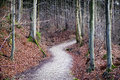 Footpath at a forest photo Royalty Free Stock Images