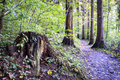 Footpath at a forest photo Royalty Free Stock Photo