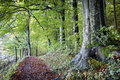 Footpath at a forest photo Royalty Free Stock Photos