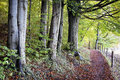 Footpath at a forest photo Royalty Free Stock Image