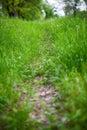 Footpath green abstract green grass Stock Photos