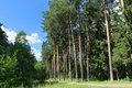 Footpath, green grass and tall trees in forest Royalty Free Stock Photo