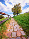 Footpath old cobblestone at a park Stock Photos