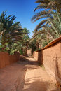 Footpath in palm grove Stock Image