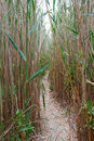 Footpath in a reed Royalty Free Stock Photo