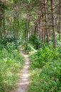 Footpath in the summer forest Royalty Free Stock Images