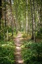 Footpath in the summer forest Royalty Free Stock Photos
