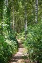 Footpath in the summer forest Royalty Free Stock Image